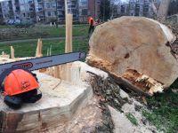 Foto 2 van het album Vellen van bomen