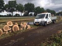 Foto 1 van het album Vellen van bomen