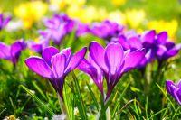 Maak uw tuin lenteklaar!